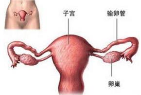 子宫性不孕
